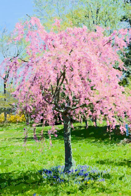 Time-less-image Spring Finery