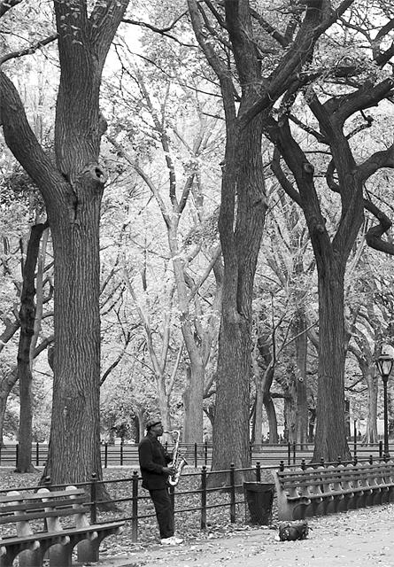 Natural Rhythm Central Park