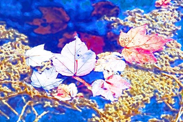 Puddle Art