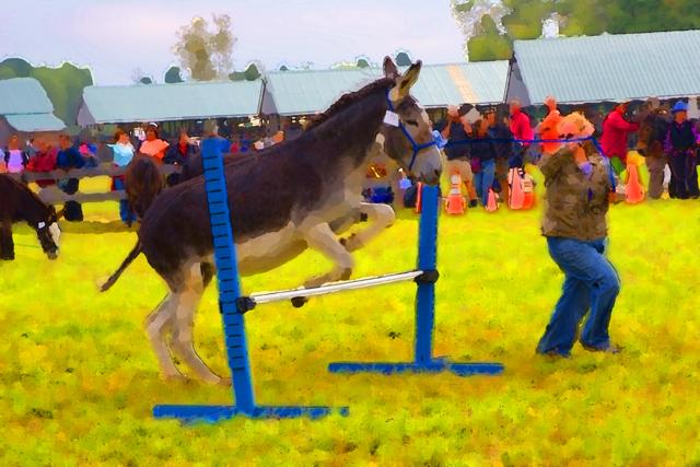 Time-less-image Donkey Show