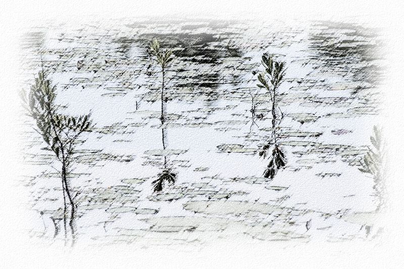 Time-less-image Bar Harbor Pond