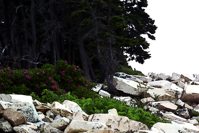 Time-less-images Mount Desert Island