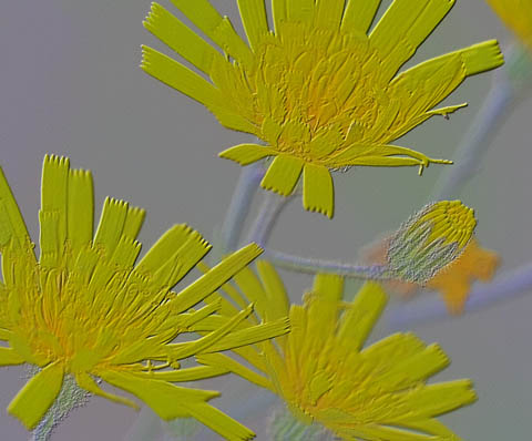 Time-less-image Etched in Time Flowers